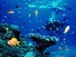 Scuba Diving in Puerto Vallarta David Pullen Properties_Las Marietas Islands