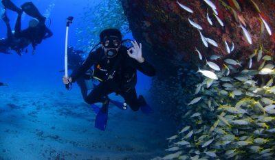 scuba diver swimming through a school of fish