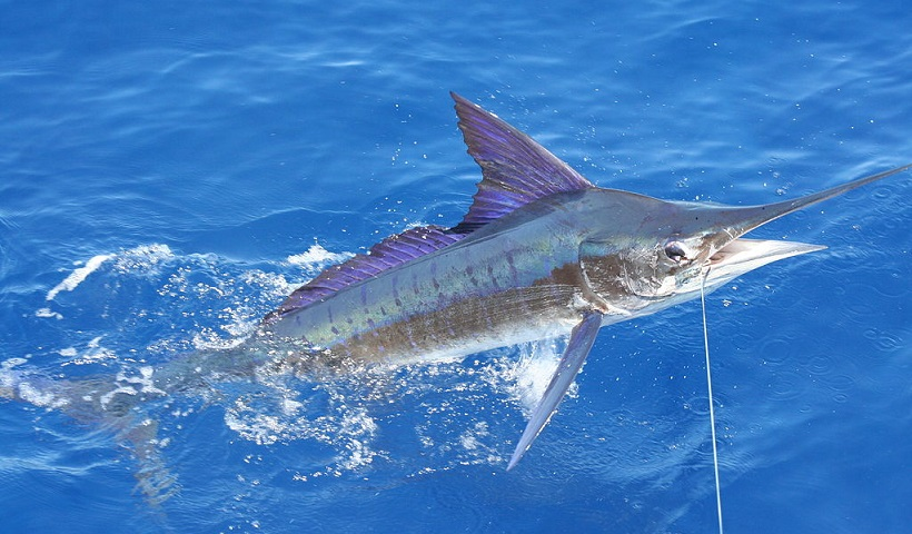 puerto vallarta fishing, david pullen properties